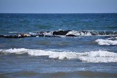 太平洋公用印章,海豹属vitulina richardsi, 4 免版税库存图片