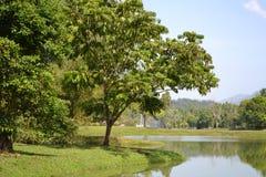 太平湖公园(塔曼Tasik太平) 免版税库存图片