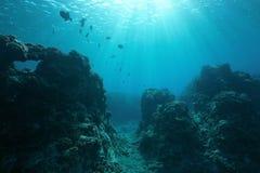 太平洋地板水下的海景阳光 免版税图库摄影