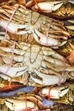 太平洋大蟹待售 免版税图库摄影