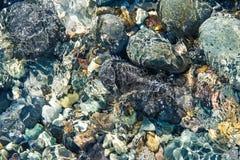 太平洋底部岩石 免版税库存图片