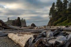 太平洋海岸漂流木头 库存图片
