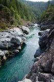 太平洋海岸风景森林 免版税库存图片