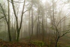 太平洋西北地区有雾的早晨森林场面 免版税库存图片