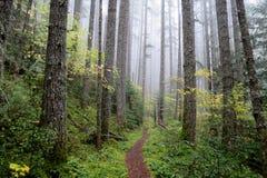 太平洋西北地区森林足迹 免版税库存图片