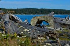 太平洋西北地区漂流木头 库存图片