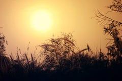 太阳、树和天空美好的自然风景  晚上射击了图片,太阳设置 免版税图库摄影
