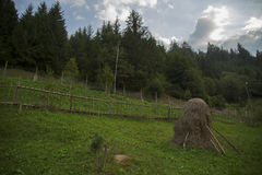太阳、风景和绿草 免版税库存照片