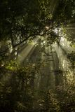 太阳下木和光芒在Bardia国家公园,尼泊尔 免版税图库摄影
