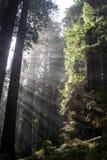 太阳之前温暖的树 免版税库存图片