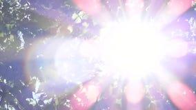 太阳亮光通过吹在风树离开 股票录像