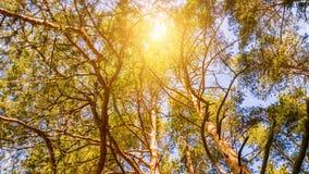太阳亮光通过树 免版税图库摄影