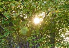 太阳亮光 库存图片