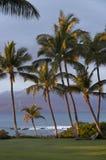 太阳亲吻了棕榈树 库存照片