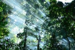 太阳光在森林里 库存照片