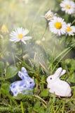 太阳光芒两只复活节兔子 免版税库存图片