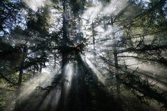 太阳光芒和烟在森林制造神秘的气氛 免版税库存图片
