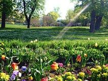 太阳光芒和花 免版税库存图片