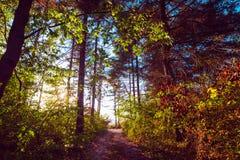 太阳光芒在五颜六色的森林在秋天 库存照片