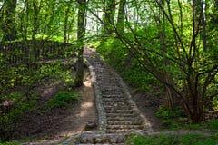 太阳光芒在春天森林 免版税库存照片