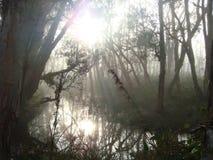 太阳光芒在沼泽地森林里 免版税库存图片