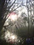 太阳光芒在沼泽地森林里 免版税库存照片