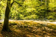 太阳光芒在秋天森林和河里 库存图片