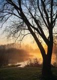太阳光芒断裂通过树 库存图片