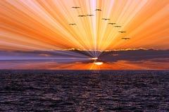 太阳光芒海洋日落 库存图片
