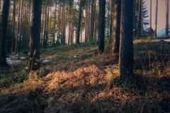 太阳光芒的绿色春天森林 图库摄影
