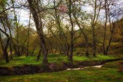 太阳光芒的绿色春天森林 库存照片