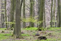 太阳光芒的绿色春天森林 库存图片