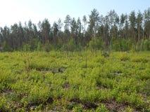 太阳光芒的绿色春天森林 免版税库存照片