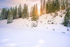 太阳光芒通过冷杉森林在冬天 图库摄影