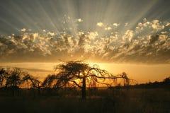 太阳光芒通过在一个偏僻的树剪影后的一朵惊人的云彩发光 免版税库存照片