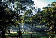太阳光芒通过在日出的树 免版税库存图片