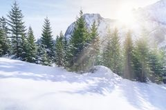 太阳光芒通过多雪的山和树 免版税库存照片