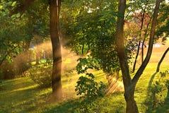 太阳光芒通过树 免版税库存图片