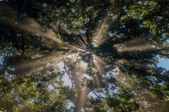 太阳光芒通过树 免版税库存照片