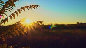太阳光芒通过灌木分支 秋叶 股票视频