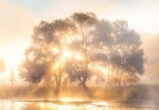 太阳光芒通过雾和树的 免版税图库摄影