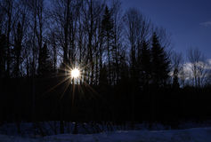 太阳光芒通过结构树 免版税库存图片