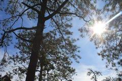 太阳光  免版税库存照片