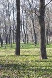 太阳公园有古老树 免版税图库摄影