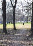 太阳公园有古老树 免版税库存照片