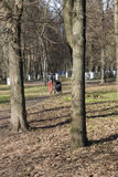 太阳公园有古老树 免版税库存图片