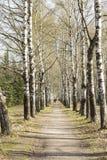 太阳公园有古老树 H 库存图片