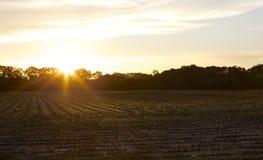 太阳升起在一个庄稼领域在田纳西 免版税库存照片