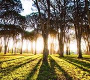 太阳反射 图库摄影