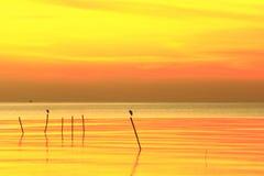 太阳发光金黄照亮美丽的海洋 免版税图库摄影